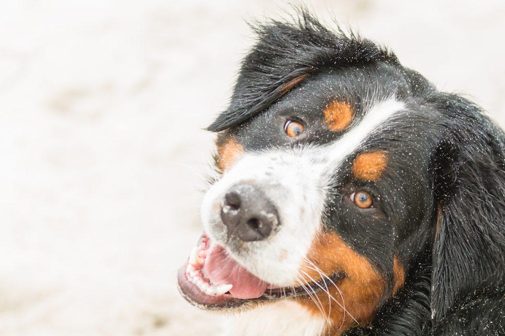 Strand-Hunde-Shooting