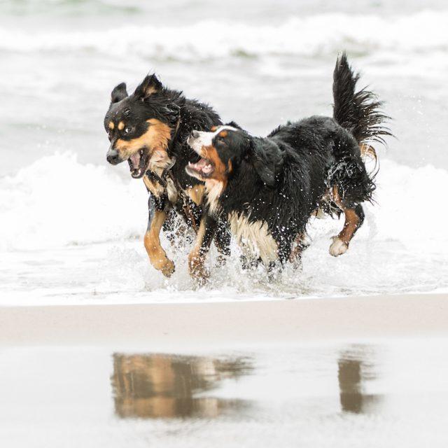 private shooting - Hundeshooting am Strand