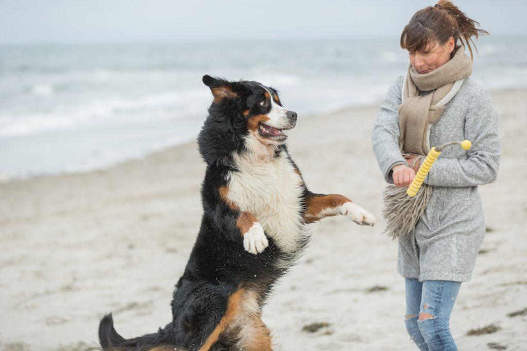 Strand Hunde-Shooting - Rübchen
