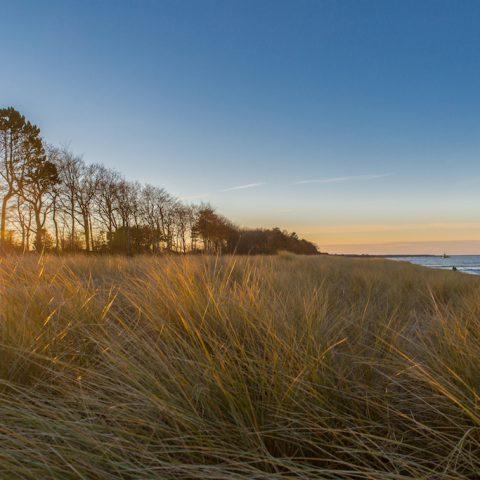 Düne und meer - Zingst am Strand